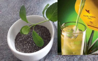 Chia Samen und Aloe Vera-  Die Geheimwaffe für deine Gesundheit