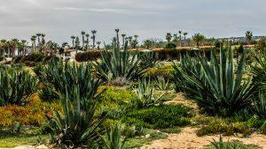 Zitrone-Ingwer Aloe